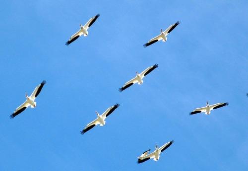 birds-112083_640