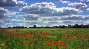 https://pixabay.com/en/field-of-poppies-brandenburg-nature-50588/