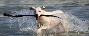 dog-937193_960_720